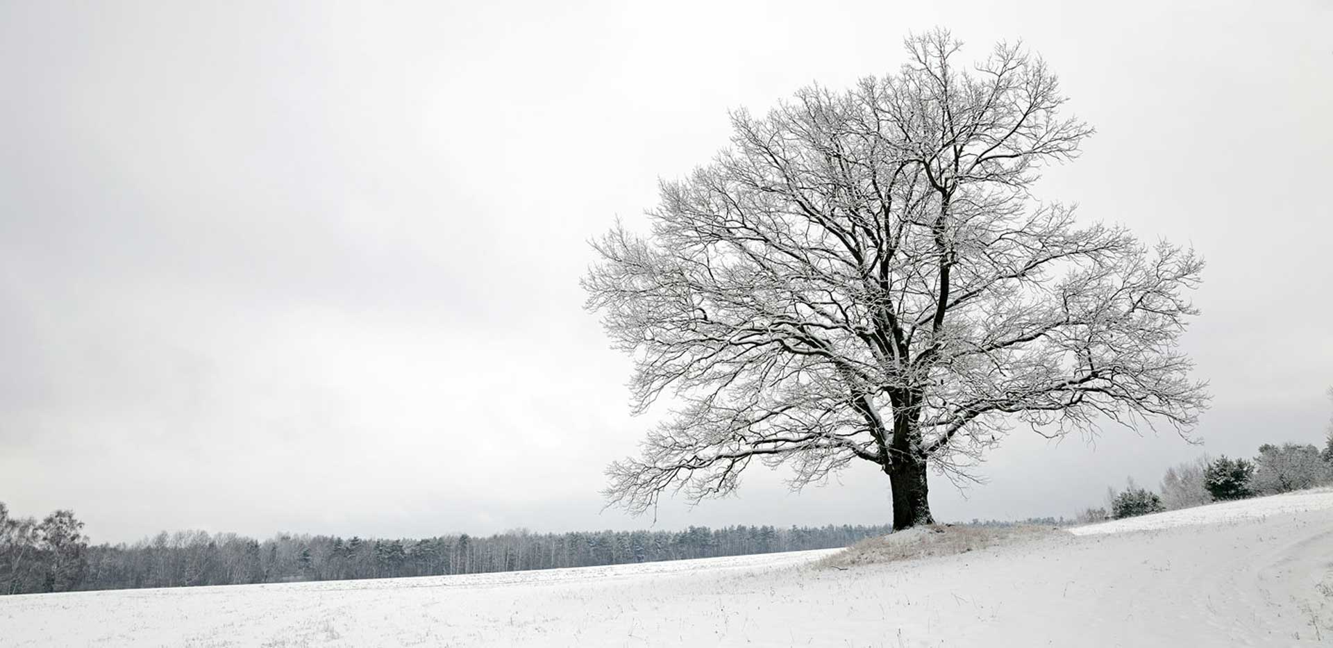 Winter_tree.jpg
